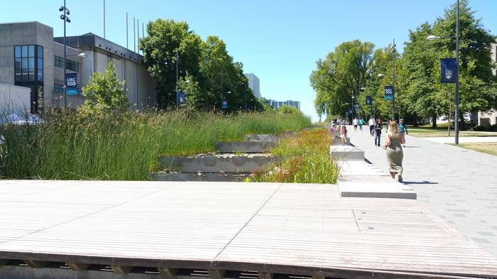 UBC Ladder Marsh photo