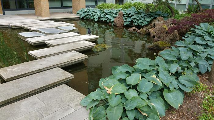 HKU-UBC House Rock Pond photo