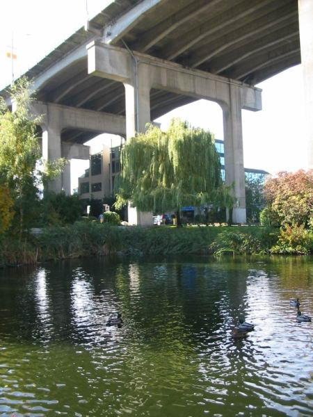 Granville Island Duck Pond photo
