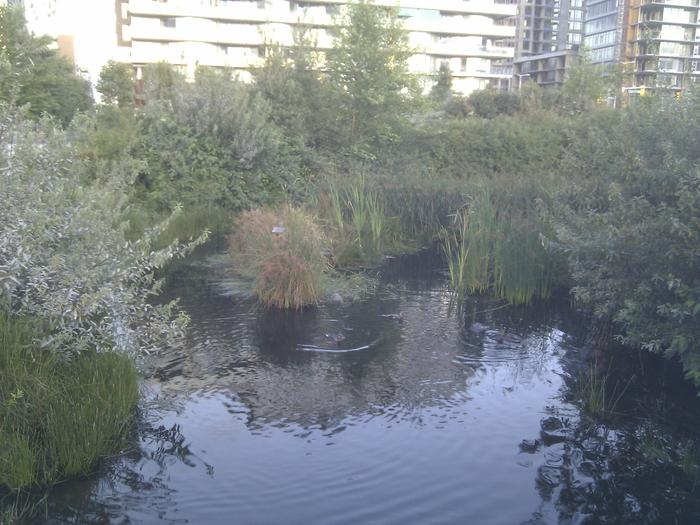 Olympic Village Duck Pond photo
