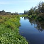 Burnaby Lake photo # 12
