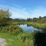 Burnaby Lake photo # 13
