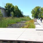 UBC Ladder Marsh photo # 10