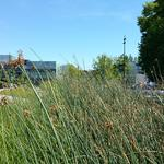 UBC Ladder Marsh photo # 4