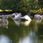 False Creek Duck Pond photo # 12