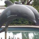 Metrotown Dolphins