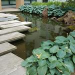 HKU-UBC House Rock Pond photo # 9
