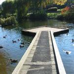 Granville Island Duck Pond photo # 12