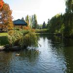 Granville Island Duck Pond photo # 7