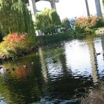 Granville Island Duck Pond photo # 3