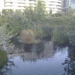 Olympic Village Duck Pond photo # 22