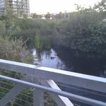 Olympic Village Duck Pond photo # 15