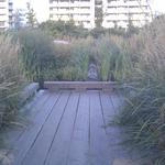 Olympic Village Duck Pond photo # 4